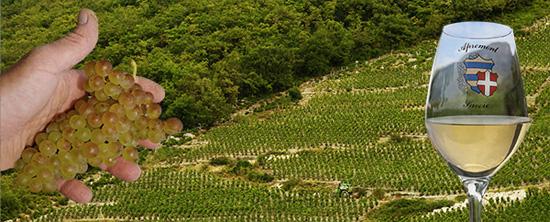 Exposition De la Vigne au Vin